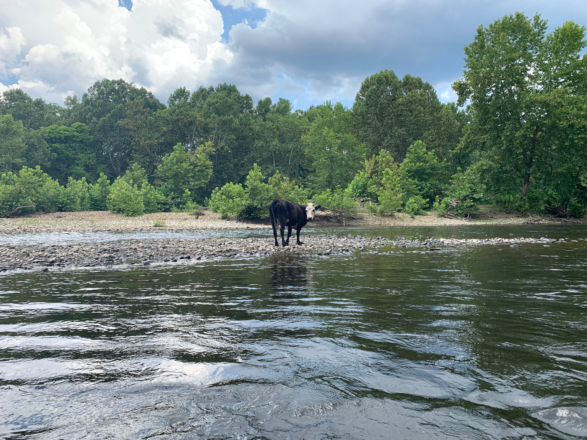 GA Committees to Take Up Clean Water Bills; We Need You!